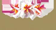 Pure Fiji discount codes