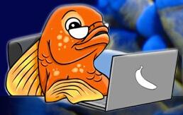 Guppy's Aquarium discount codes